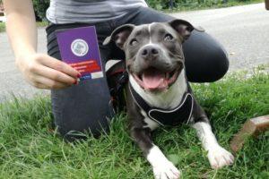 Foto Hundeführschein und Geprüfter Stadthund