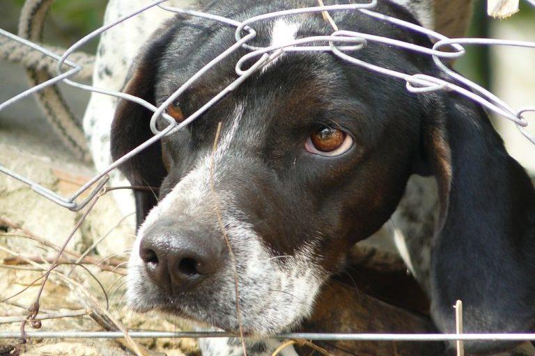 Foto Tierschutzhunde